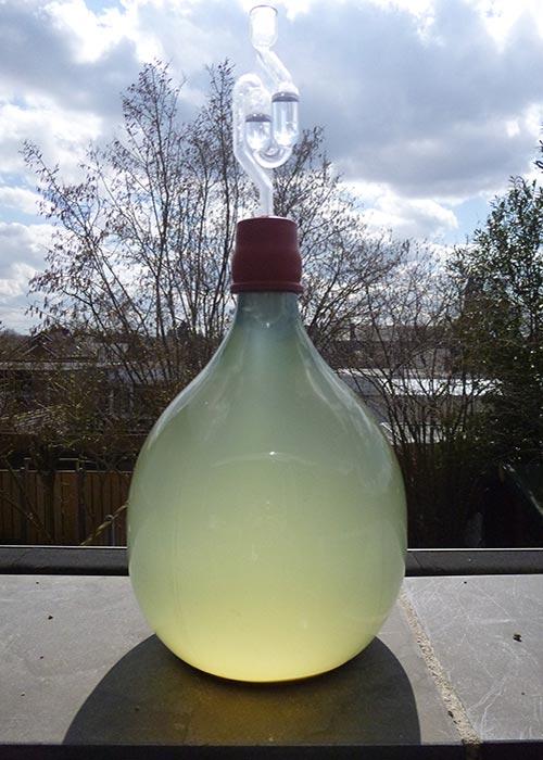 Kiwi wijn